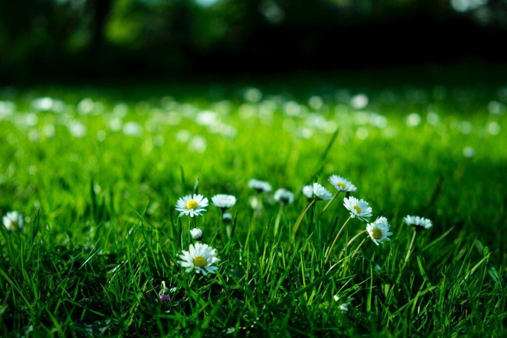 Garten Paradies